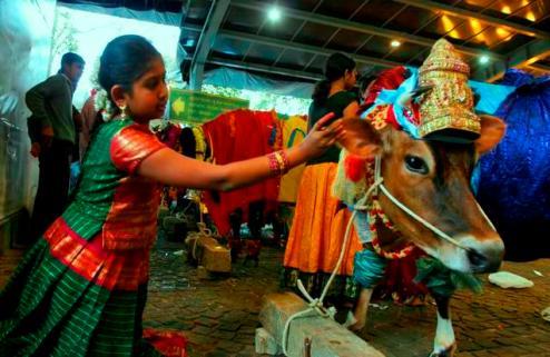 india-hindu-festival-2009-1-14-11-35-34