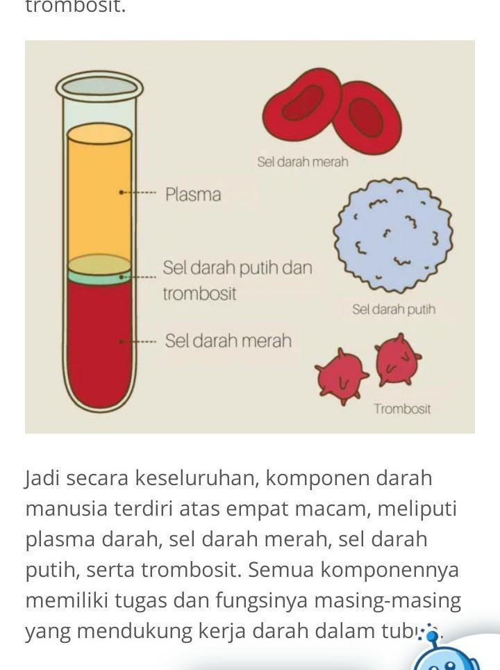 Fungsi Darah : fungsi, darah, Komponen, Darah, Fungsinya