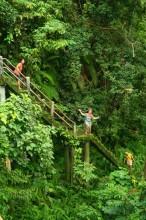 Kesejukan Hutan Lombok