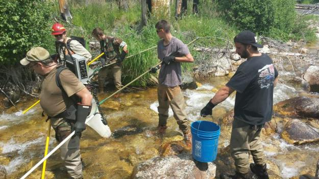Stream surveying with electricity – Two Forest Service biologistsl, Nick Brown, Garrett Way, Chris Ferroni (left to right)