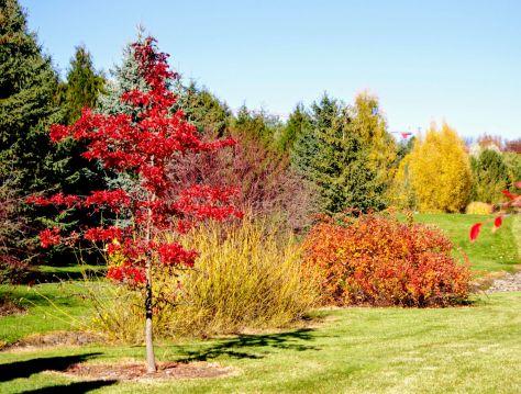 UI Arboretum Grounds