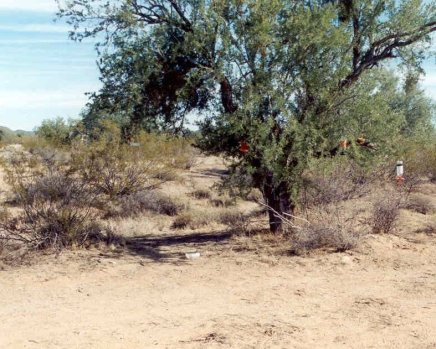 Two Mile Wash- Why, AZ