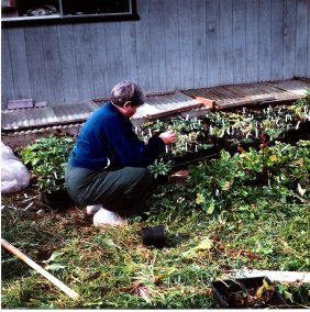 Betty with seedlings - Bonney Lake 10001