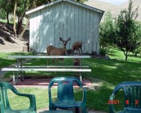 GC-backporch-doe & fawn2