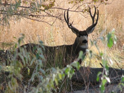 2 BUCK Middle Marsh 2006