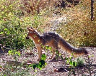 Oct 22 -Fox 004