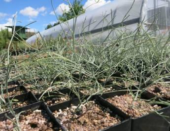 Conservation efforts at the Idaho Botanical Gardens