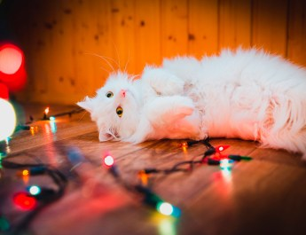 Christmas Light Hazard for Pet