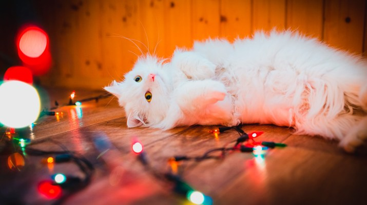 Christmas Light Hazard for Pet