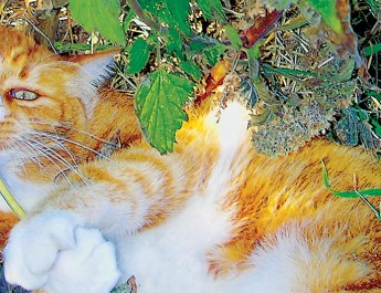 Idaho Senior Independent — Feline Friend