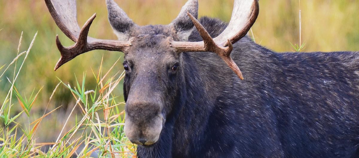 Wild in the North: Kootenai NWR
