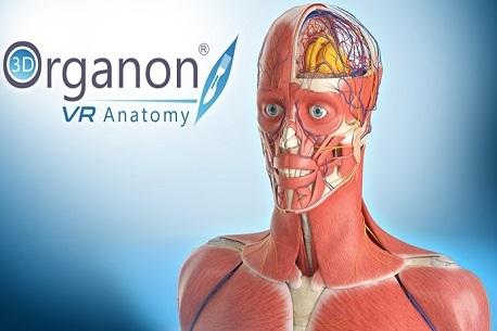 3D-Organon-VR-Anatomy-1