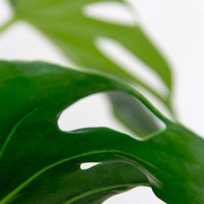 Urban Jungle Bloggers :: Botanical zoom