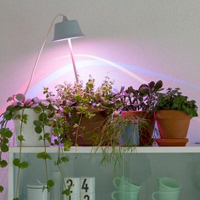 Bulbo: Light for Food