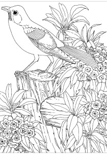 Birds - Free printable Coloring pages for kids8