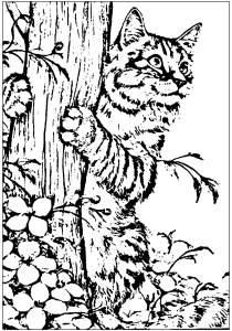 Cats - Free printable Coloring pages for kids1