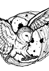 Owls - Free printable Coloring pages for kids15