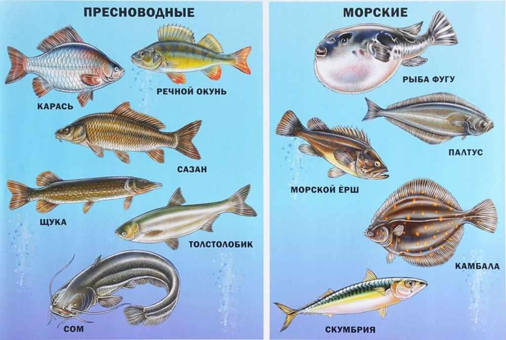 Рыбы фото с названиями для детей