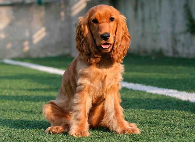 Самые лучшие собаки для детей