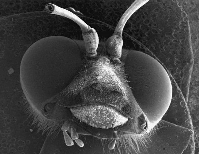 Микробы и вирусы под микроскопом