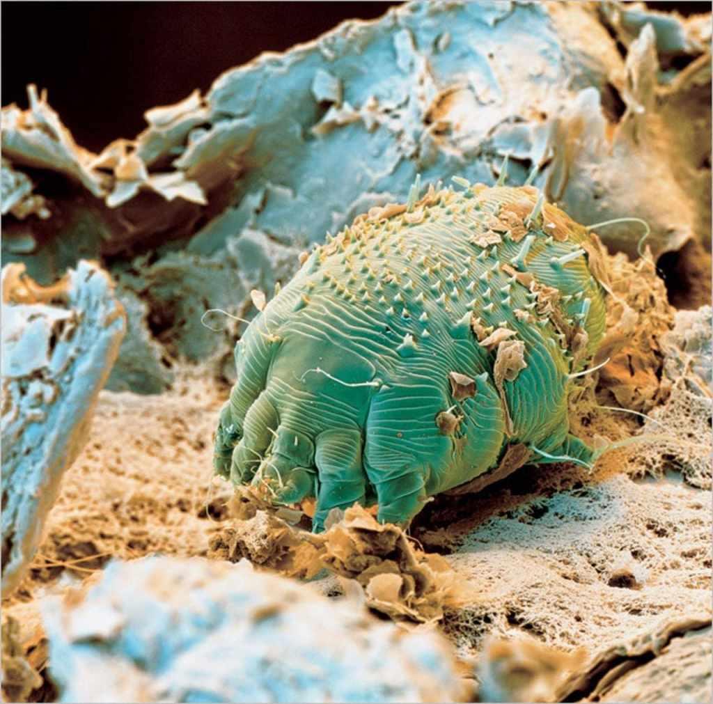 Микробы настоящие