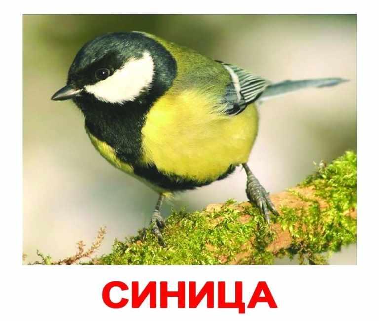 Птицы - фото для детей