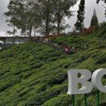 Boh Tea Center