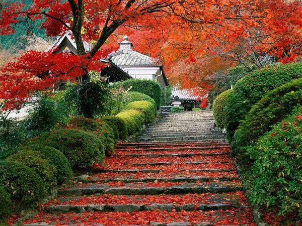 723-automne.jpeg