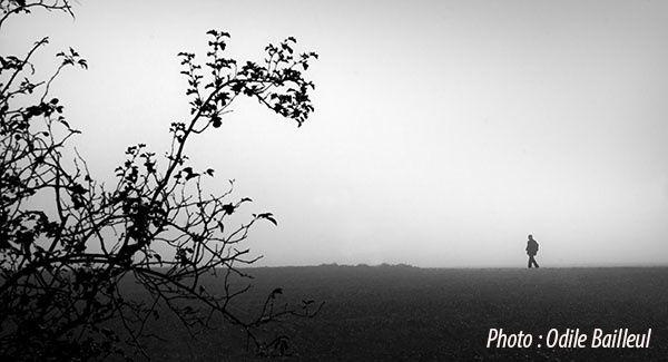 Le-matin-dans-la-brume.jpg