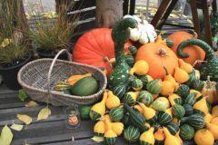 fruits et legumes d automne s