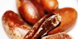 le-pebe-fausse-noix-de-muscade-5917192.png