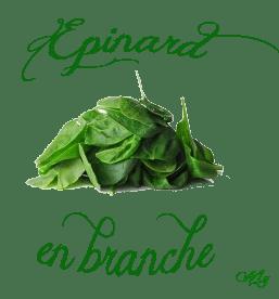 epinard-branche