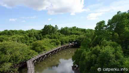 The mangrove trekking forest seen from height.