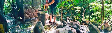 Best Romantic Ubud Honeymoon Destination