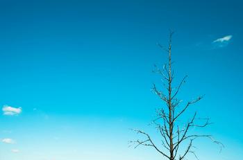 冬の木立と青空