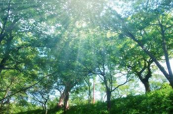 森に射す日の光