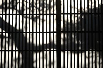 玄関戸に映る木のシルエット