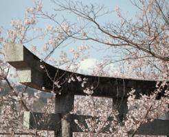 石の鳥居と桜の花