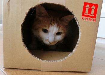 天地無用の箱の中の猫