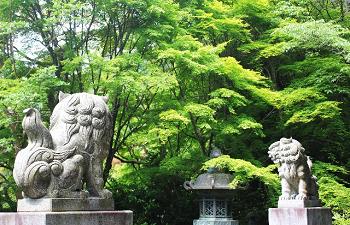 金蔵寺の狛犬