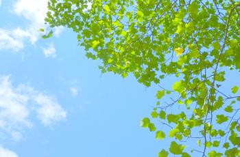 青空と緑葉