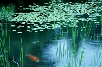 池に降る雨