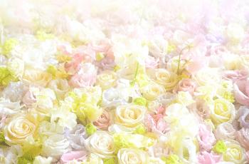 様々な色のバラの花