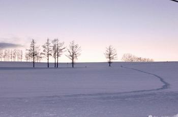 夕方の雪原
