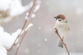 雪の中で木の枝に止まる小鳥