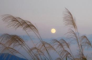 薄と仲秋の名月