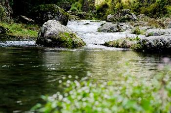 山の中の渓流