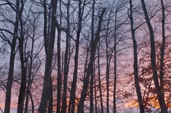夕暮れの林