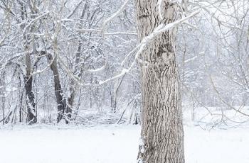 雪が降る林
