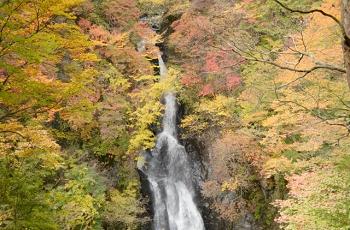 紅葉の中を流れる滝